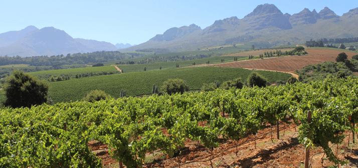 sa-vineyards-stellenbosch2