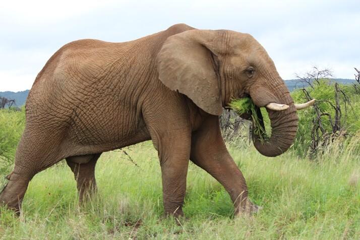 south-africa-elephant-in-madikwe