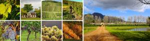 southafrica_blog
