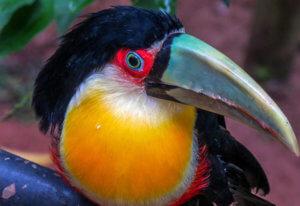 Brazilian Wildlife