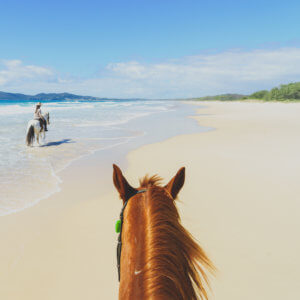 Noosa North Shore horse riding